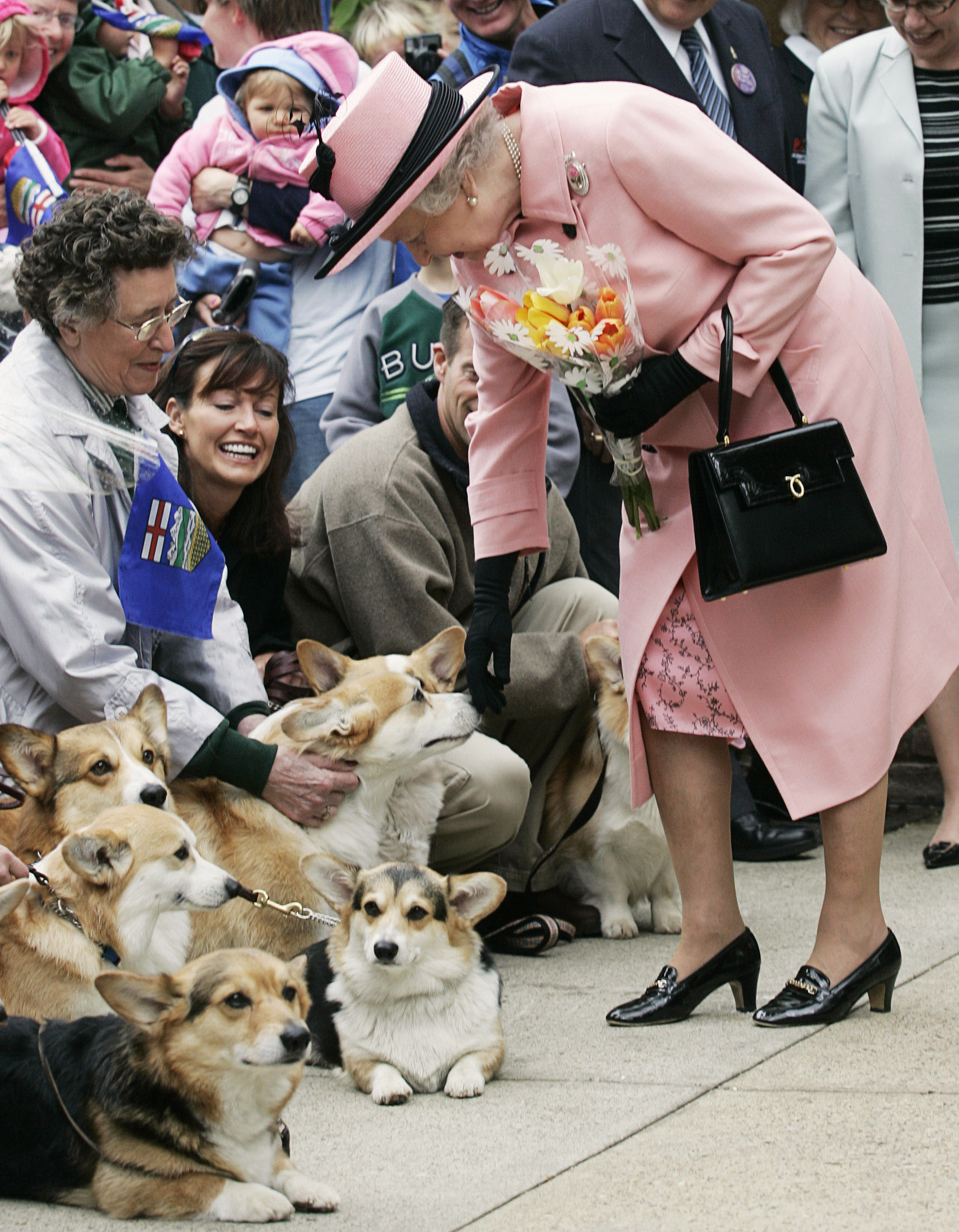 Queen Elizabeth stops to pet sveral corgi dogs while visiting the Alberta Legislature