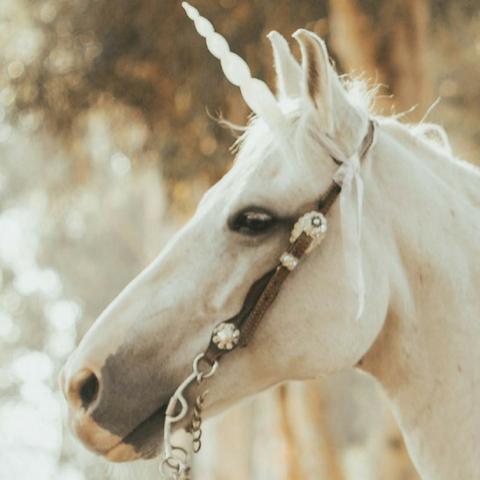 Il lusso è un unicorno (e altri pensieri da vacanza)