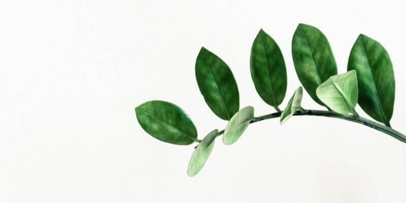 un ramo con delle foglie su fondo bianco